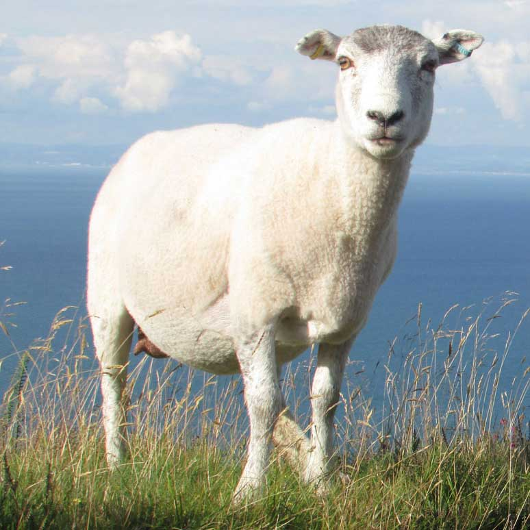 Exmoor Hill Farmers Network course | Business Action